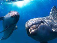 Ученые: дельфины способны строить планы