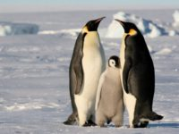 Ученые: льды в Антарктике начали таять с рекордной скоростью