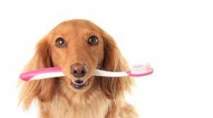 Чистка зубов собакам ультразвуком